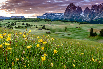 Mountain Meadows
