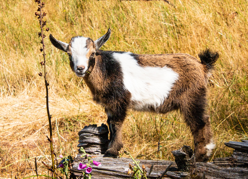 Leaping Lamb Farm-8019.jpg