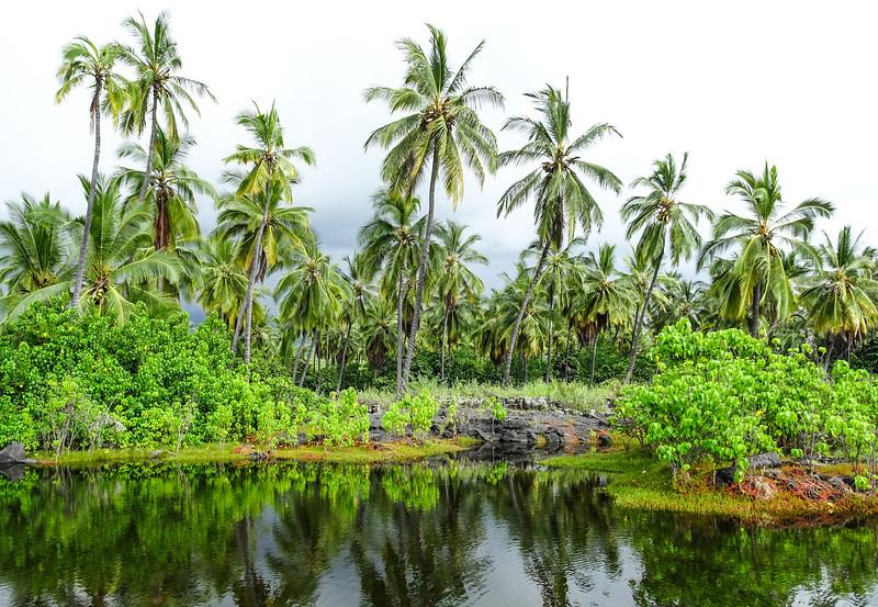 Palms at at Pu'uhonua O Honaunau