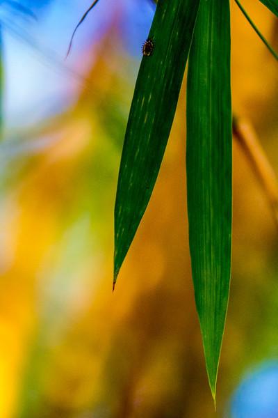 Bamboo Tropicals-7865.jpg