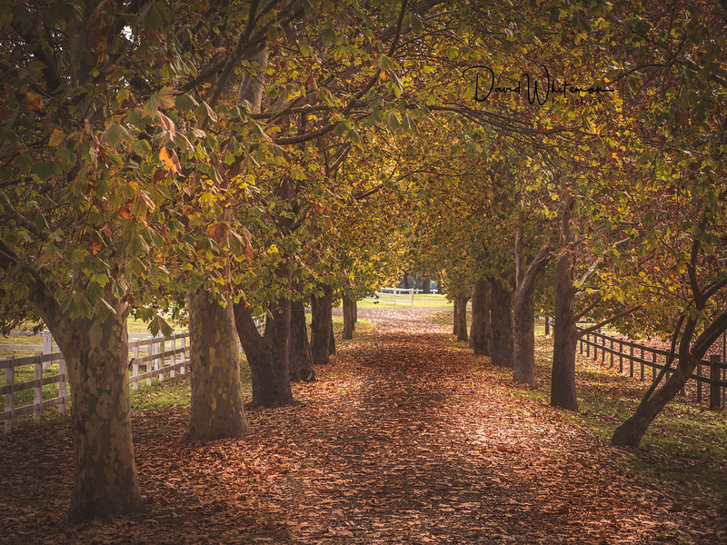 Cornwallis in Autumn-Edit.jpg
