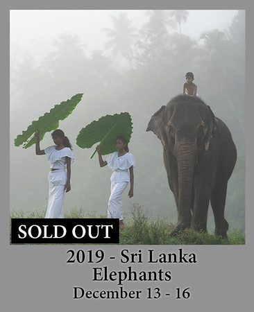 07-30-2020 SriLanka Elephant
