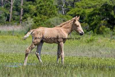 Alice's Sandcastle's Filly