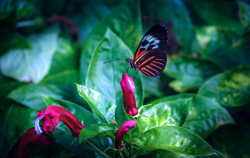 Butterfly-012.jpg