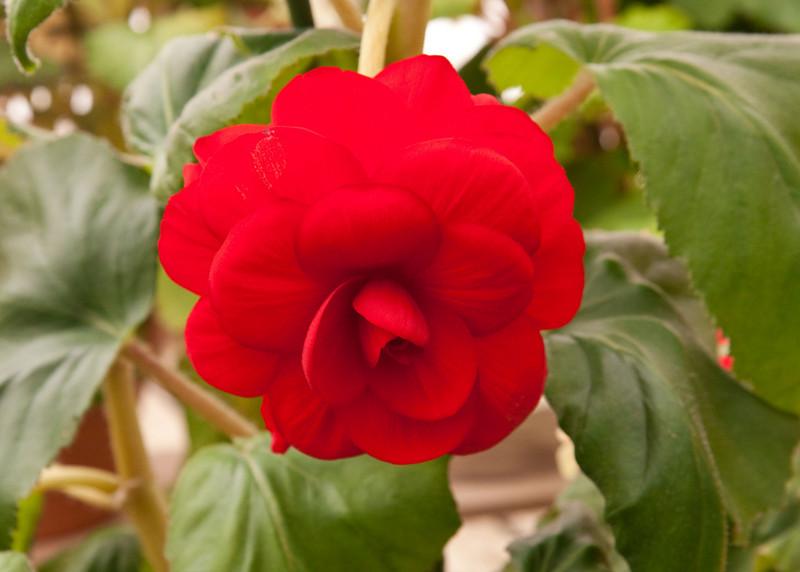 2009 09 06_White Flower Farm_0138_edited-1.jpg