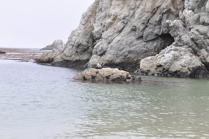 Point Lobos 2009/07/18