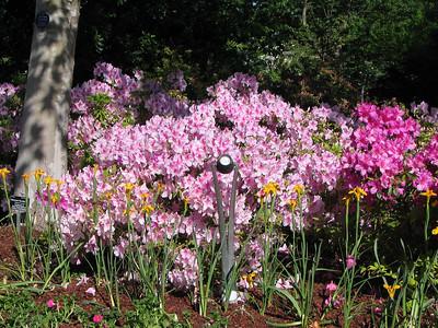 Dallas Arboretum 4/14/2010
