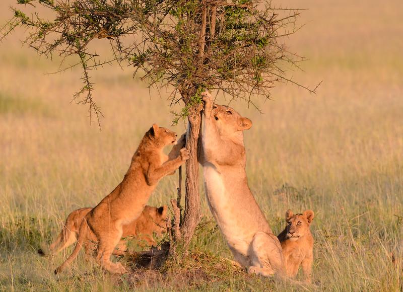 20160215__KET7383_Serengeti_Day_7.jpg