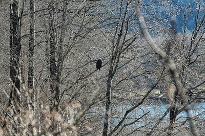 Skagit River Eagle ride - 1.27.7