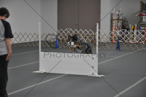 DDS2012 Obedience