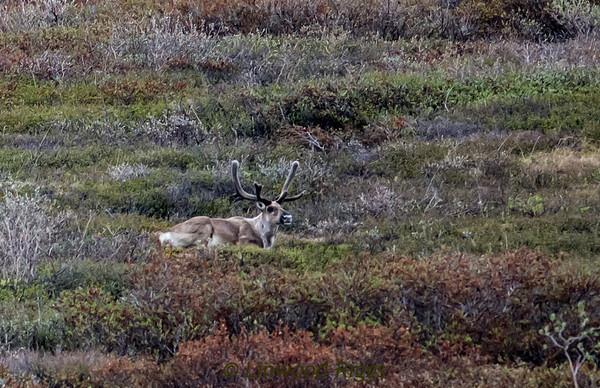 2013 Alaska trip - Denali National Park.