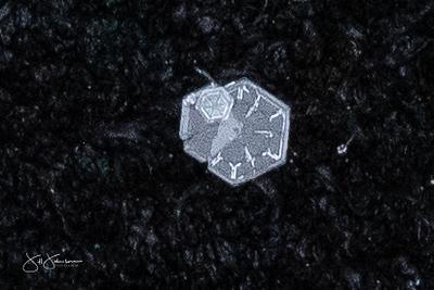 snowflakes-1623.jpg