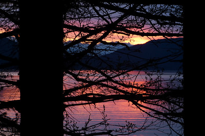 Sunset Through the Trees May 2012, Cynthia Meyer, Juneau, Alaska
