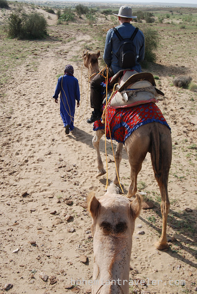 rajasthan camel train (3).jpg