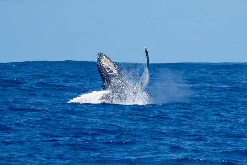 whales-leila-54.jpg