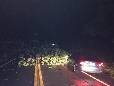 Tree Down Near Mauch Chunk Lake, Summit Hill, from Angela Nardini, Jim Thorpe (7-23-2014)