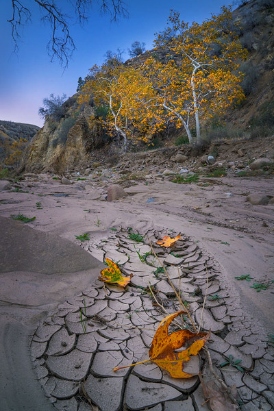 Castaic_Creek_Fall_Color_Southern_California_DSC3455 b.jpg