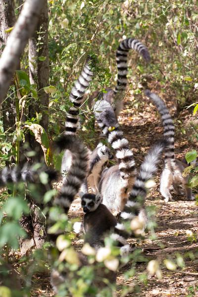 Madagascar_2013_FH0T1014.jpg