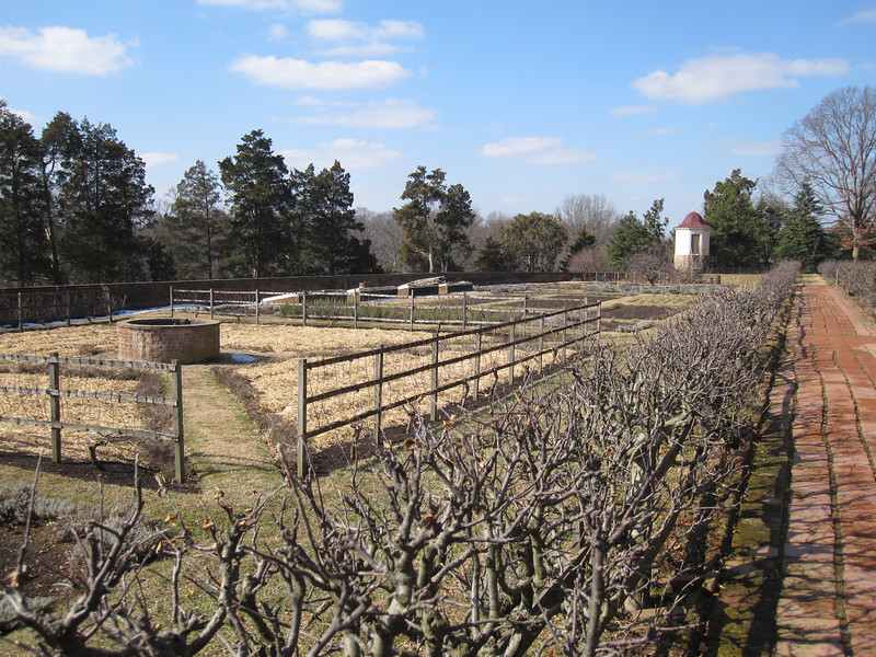 February garden at Mt. Vernon