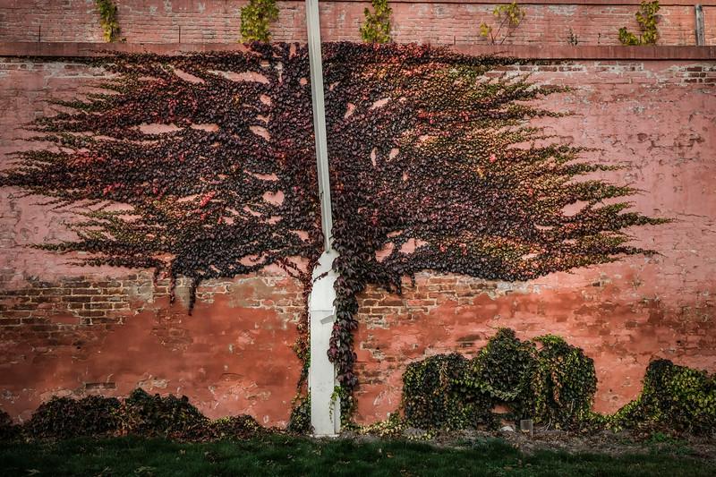 brevnov stromy-003.jpg