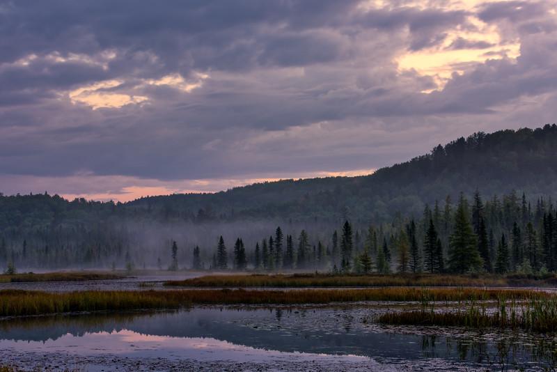 Sept 22-2017-spruce bog_01-1.jpg
