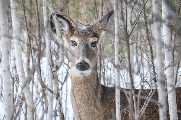 Wildlife and Nature of Northern Wisconsin