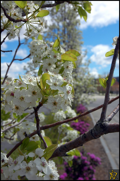 SpringDay2.jpg