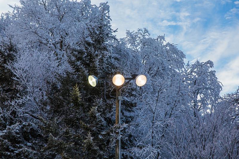 2020-02-01_SN_KS_Frosty Trees-0713.jpg