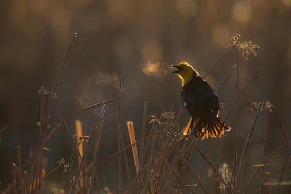 2019 National Audubon Top 100 Images