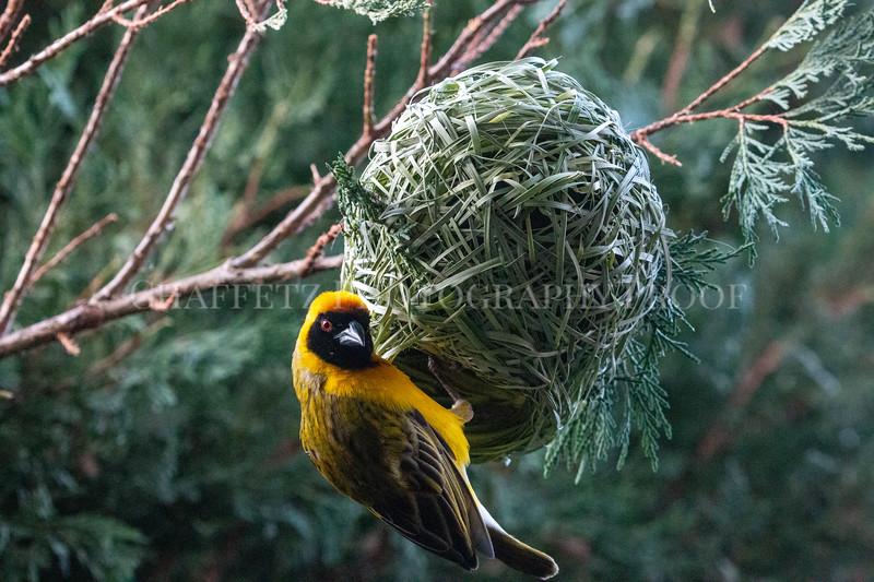 BirdNestAfrica.jpg