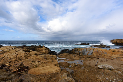 4/8/2017 Monterey, CA Point Lobos & Whale Watching
