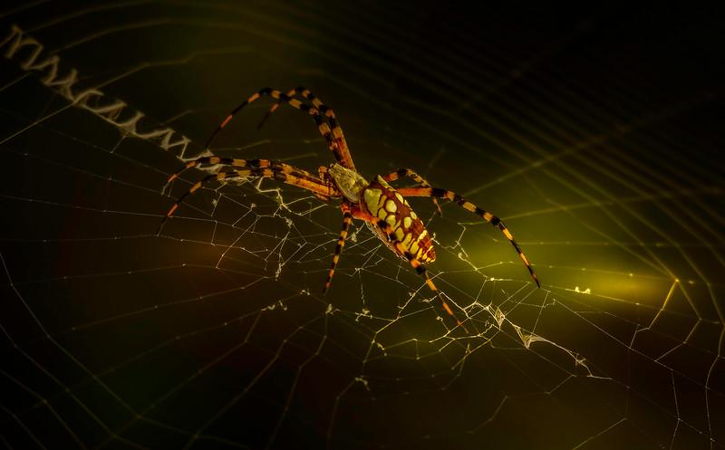 Spiders-Arachnids-133.jpg
