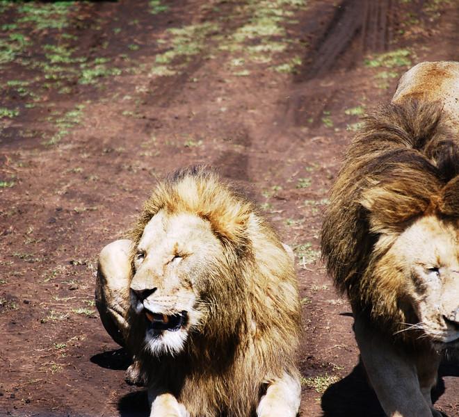 Ngorongoro (140).JPG