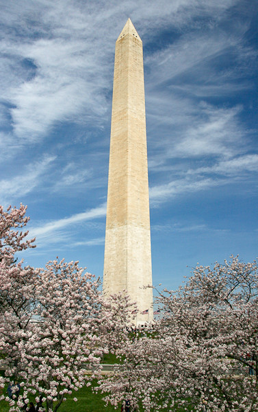 Washington Monument and the Cherry Blossums