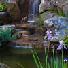 Japanese Tea Garden Waterfall - The Gardens at Lake Merritt
