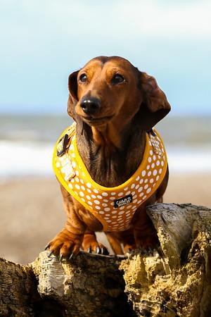 Dog Portrait Shoot - Ellie McMillian