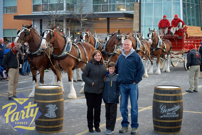 Clydesdale Portraits 270.jpg