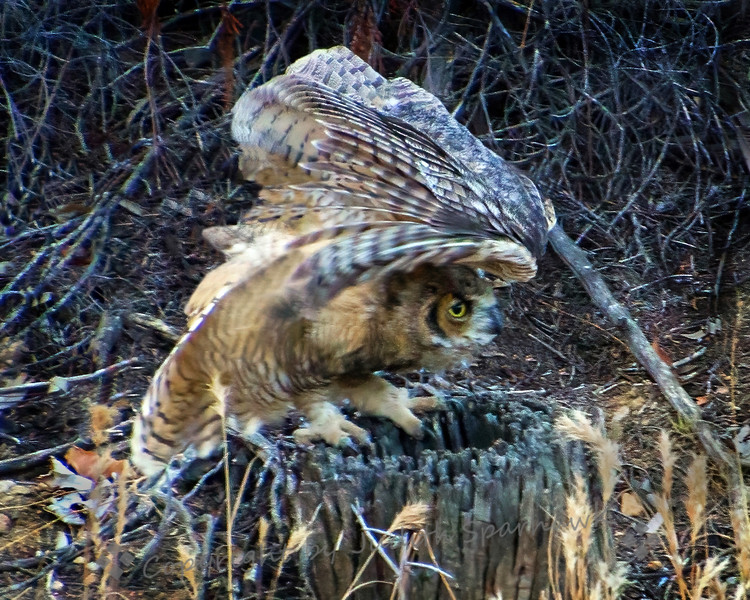 Winging It! - Judith Sparhawk