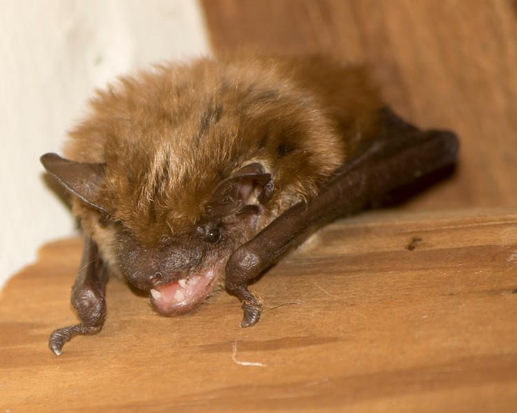 X2766 Bat.jpg