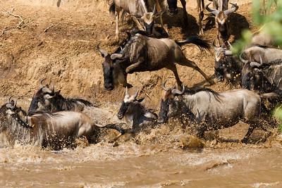 Kenya The Masai Mara