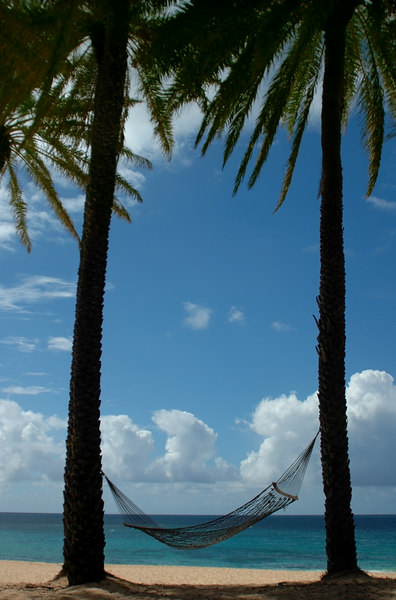 A perfect day at the beach with a hammock between two palms awaiting a dreamerNorth Shore  Oahu  Hawaii