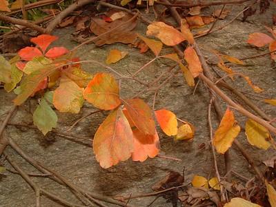 brookside Oct 27, 2004