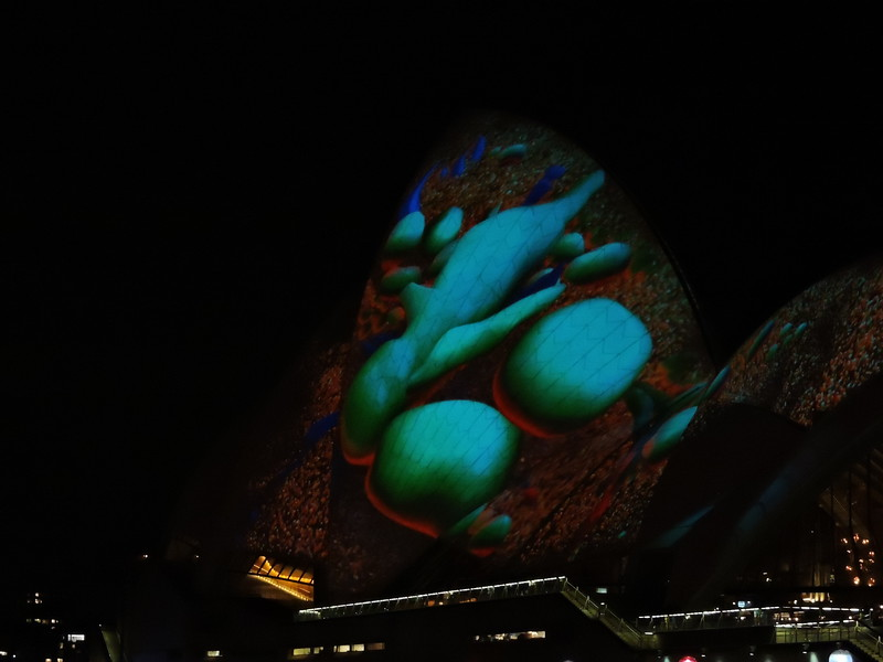 Marine life projected onto Sydney Opera House sails - photo by Pam Baker