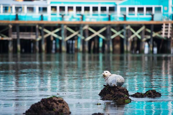 Monterey - September 2015