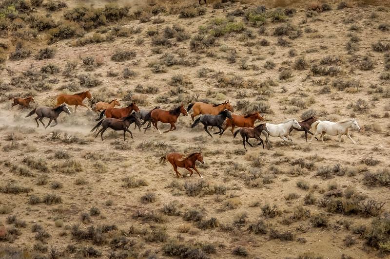 Wild Horses Running #4