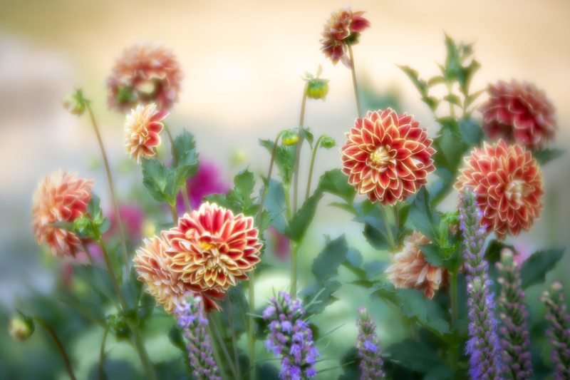 Lensbaby Unplugged: Soft Focus Images