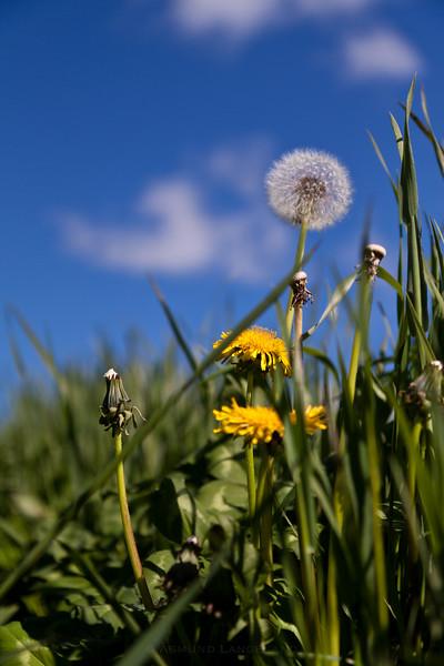 Grashøsting2011-106