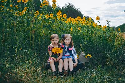 Sunflowers Whitney