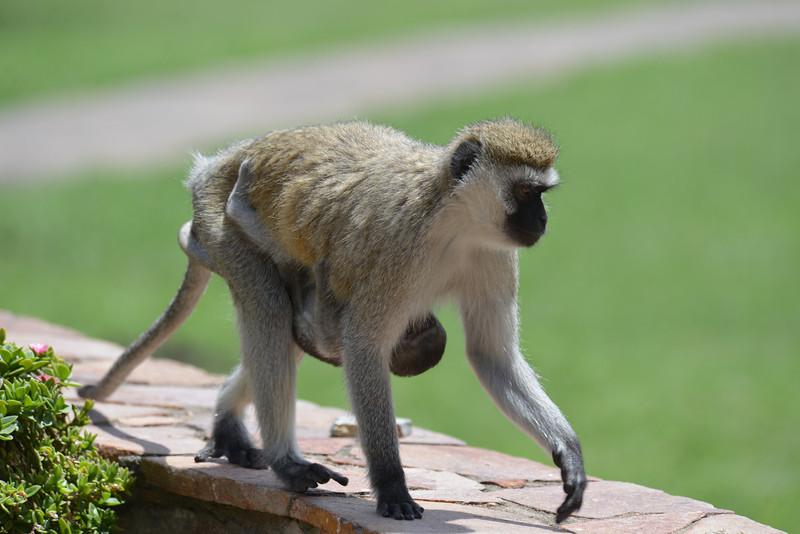 East Africa Safari 225.jpg