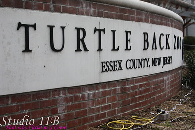 Turtle Back Zoo - Noveber 29, 2008